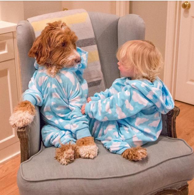 Este Niño Y Este Perro Se Visten Igual
