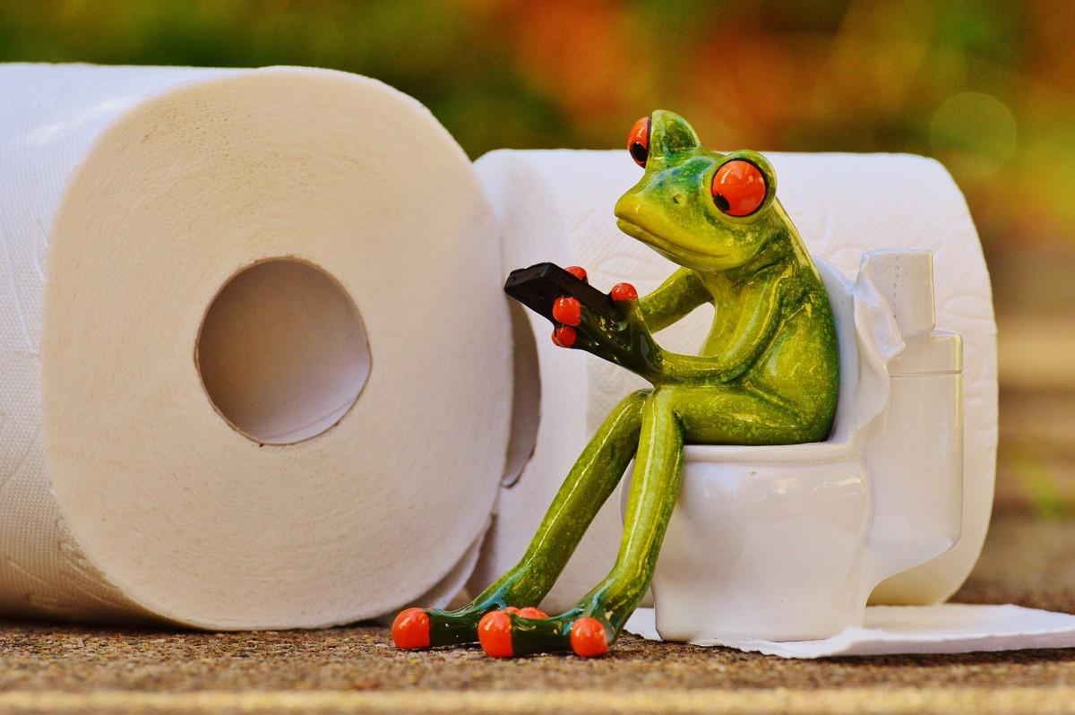Frog 1037248 1920